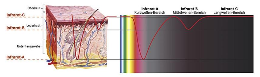 Zeichnung Wirksamkeit Infrarotstrahlen auf Haut und Immunsystem